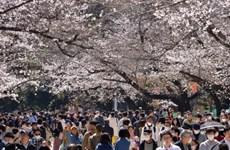 Nhiều quốc gia đóng cửa vì dịch bệnh, vì sao Nhật Bản là một ngoại lệ?