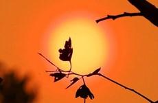 Số người bị ảnh hưởng bởi nắng nóng tăng gấp 4 lần vào cuối thế kỷ