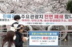 Lo ngại COVID-19, Hàn Quốc hủy Lễ hội hoa anh đào hồ Seokchon