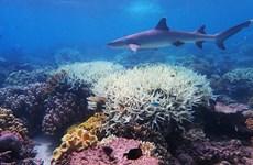 Thử nghiệm kỹ thuật 'làm sáng mây,' cứu quần thể san hô Great Barrier