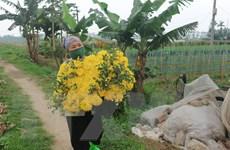 Dịch COVID-19: Mê Linh tiếp tục phòng dịch, khôi phục sản xuất