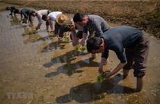 Triều Tiên có thể thiếu lương thực trầm trọng trong năm 2020