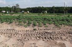 Đồng Nai yêu cầu xử lý dự án 'Dragon City' xây trên đất nông nghiệp