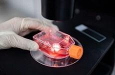 Kết quả thử nghiệm vắcxin của Trung Quốc và Italy cho kết quả khả quan
