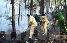 Vụ cháy rừng ở Nghệ An: Đề phòng nguy cơ bùng phát trở lại