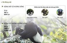 [Infographics] Vườn quốc gia Cúc Phương: Điểm du lịch hấp dẫn du khách