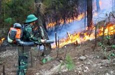 Thủ tướng Chính phủ chỉ đạo tăng cường phòng cháy, chữa cháy rừng