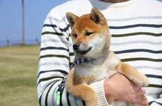 Nhật Bản phát hiện thú nuôi trong nhà đầu tiên nhiễm virus SASR-CoV-2