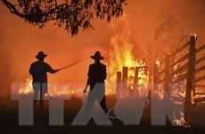 Bang New South Wales công bố kết quả điều tra thảm họa cháy rừng