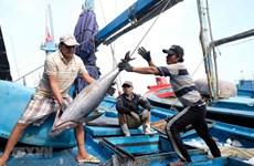 Tăng cường các giải pháp gỡ 'thẻ vàng' đối với thủy sản Việt Nam