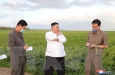 Triều Tiên: Nhà lãnh đạo Kim Jong-un chủ trì cuộc họp mở rộng