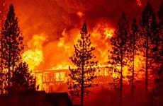 Mỹ: Bang Oregon ban bố tình trạng khẩn cấp do cháy rừng
