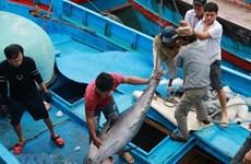 Ngăn chặn xử lý triệt để hành vi khai thác hải sản bất hợp pháp