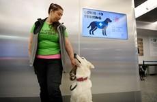 Thí điểm sử dụng chó phát hiện virus SARS-CoV-2 tại sân bay Helsinki