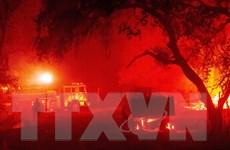 Cảnh báo nguy cơ bùng phát cháy rừng trên khắp bang California
