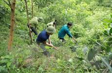 Hỗ trợ người dân tham gia trồng rừng nhằm tăng trữ lượng và chất lượng