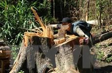 Vụ phá rừng ở Đạ Đờn: Khởi tố vụ án, bắt khẩn cấp hai đối tượng