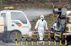Hàn Quốc xuất hiện thêm các ổ lây nhiễm cúm gia cầm độc lực cao