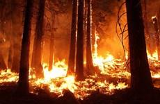 Mỹ: Cháy rừng khiến hơn 7.000 người phải sơ tán tại bang California