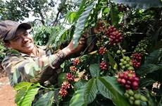 Phát triển sản phẩm quốc gia càphê Việt Nam chất lượng cao