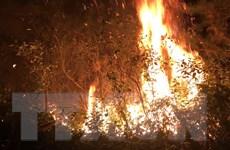Huy động khoảng 1.100 người dập tắt đám cháy rừng trồng Sóc Sơn