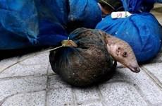 Phạt tù các đối tượng vận chuyển, buôn bán động vật hoang dã trái phép