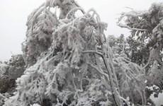 Yên Bái: Vùng cao Trạm Tấu xuất hiện băng giá, sương muối