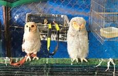 Tịch thu 9 cá thể chim hoang dã nuôi nhốt tại nhà riêng