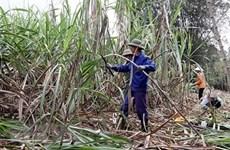 Sắp tham vấn điều tra chống bán phá giá đường mía xuất xứ Thái Lan