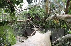 Dông, lốc xoáy tàn phá 100ha rừng trong Vườn Quốc gia Lò Gò-Xa Mát