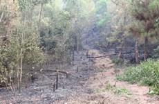 Nghệ An: Cảnh báo cháy rừng ở cấp cực kỳ nguy hiểm