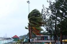 Thanh Hóa chủ động ứng phó áp thấp nhiệt đới có thể mạnh lên thành bão