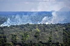 Số vụ cháy tại rừng nhiệt đới Amazon tăng kỷ lục trong tháng 6