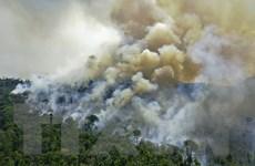 Hơn 10.000 loài động thực vật tại Amazon có nguy cơ tuyệt chủng