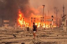 Italy: Vùng Sicily ban bố tình trạng khẩn cấp do cháy rừng