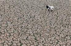 Hạn hán kỷ lục tại Chile phản ánh rõ tình trạng biến đổi khí hậu