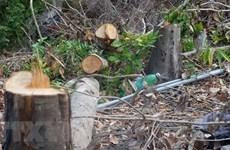 Siết chặt quản lý, bảo vệ rừng và trật tự xây dựng trên đảo Phú Quốc