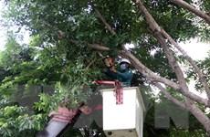 Người dân ở Quảng Nam không ra đường sau 20 giờ hôm nay để tránh bão