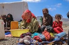 Tổ chức phi chính phủ ở Yemen giành giải Nansen vì người tị nạn