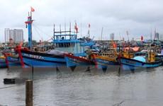 Quảng Ngãi kêu gọi tàu thuyền vào nơi trú ẩn, chủ động ứng phó mưa bão