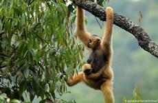 Thế giới chưa đạt đột phá cần thiết trong bảo vệ hệ sinh thái toàn cầu