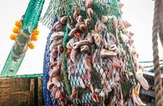 Pháp bắt giữ một tàu của Anh đánh bắt cá không giấy phép