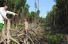 Chủ tịch UBND tỉnh Cà Mau chỉ đạo xử lý vụ phá rừng