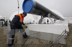 """Bulgaria ngừng xây dựng dự án """"Dòng chảy phương Nam"""""""