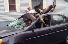 Con nai sừng tấm khổng lồ lọt thỏm trong xe sau cú đâm chí tử