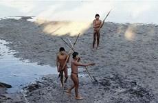 Bị truy đuổi, bộ lạc bí ẩn ở Amazon phải kêu gọi sự trợ giúp