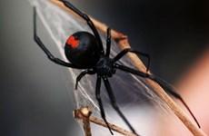 Những ngày cuối cùng đáng sợ của người đàn ông bị nhện cắn