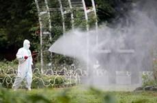 Nhật Bản: Số bệnh nhân sốt xuất huyết tăng lên tới 115 người