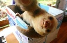 Hình ảnh cực kỳ dễ thương của động vật khi chụp ảnh selfie