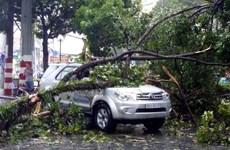 Thành phố Hồ Chí Minh: Nhiều cây lớn bị đổ trong mưa giông